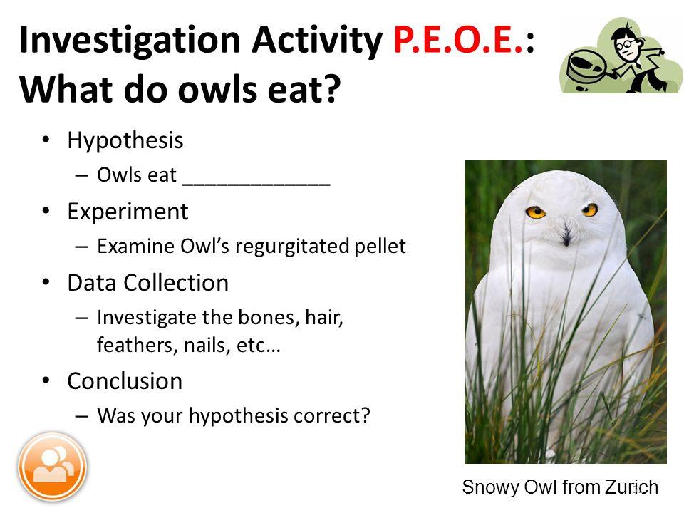 Investigation Activity P.E.O.E.: What do owls eat.