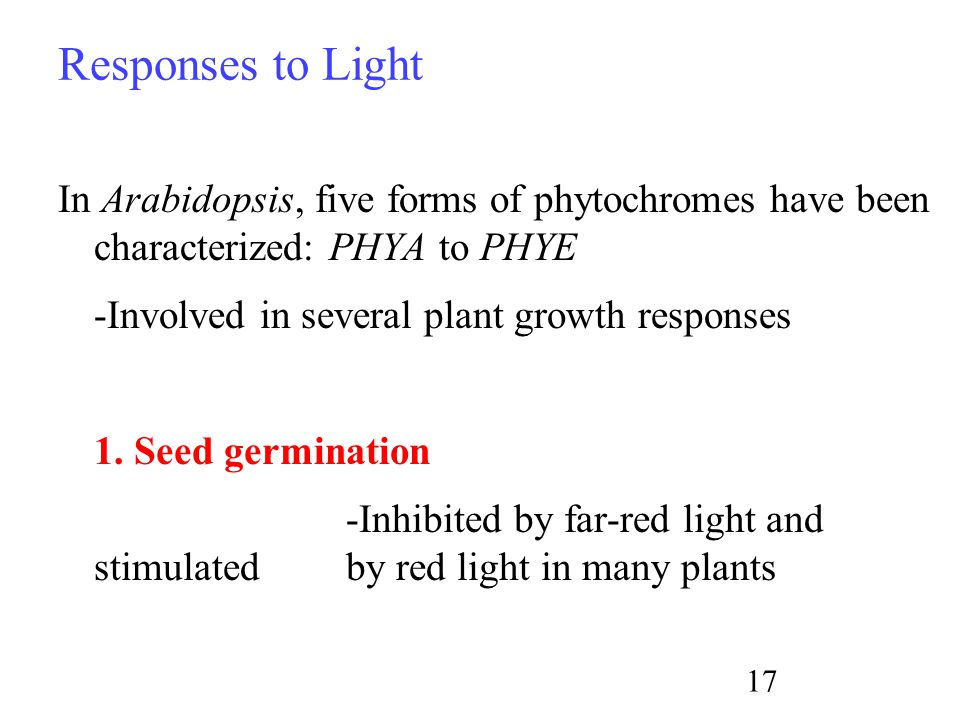 Responses to Light In Arabidopsis, five forms of phytochromes have been characterized: PHYA to PHYE -Involved in several plant growth responses 1.