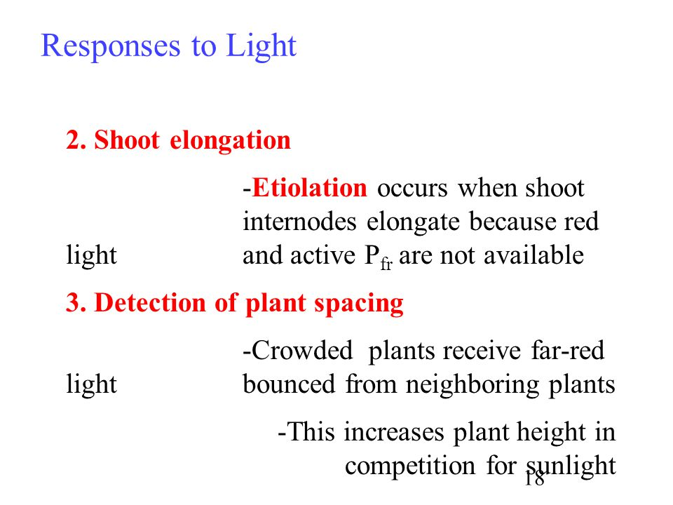 Responses to Light 2. Shoot elongation -Etiolation occurs when shoot internodes elongate because red light and active P fr are not available 3. Detect