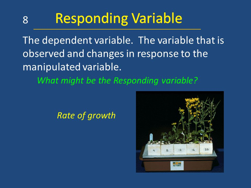 The dependent variable. The variable that is observed and changes in response to the manipulated variable. 8 Rate of growth What might be the Respondi