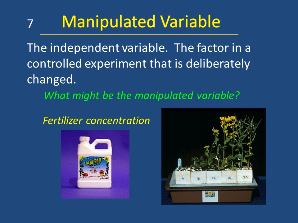 The independent variable. The factor in a controlled experiment that is deliberately changed. Fertilizer concentration 7 What might be the manipulated