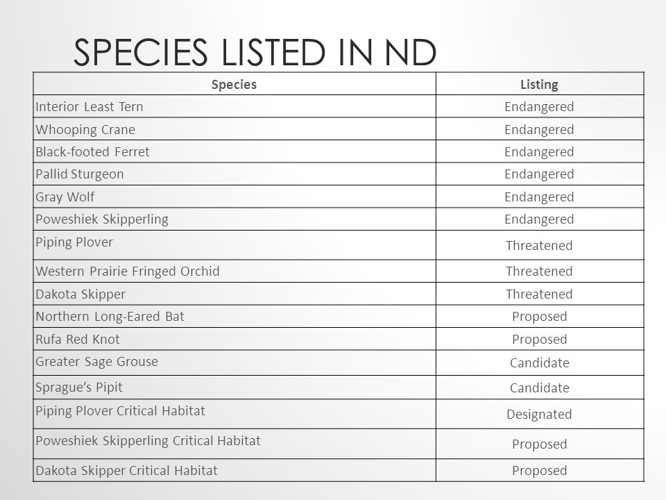 SPECIES LISTED IN ND SpeciesListing Interior Least Tern Endangered Whooping Crane Endangered Black-footed Ferret Endangered Pallid Sturgeon Endangered Gray Wolf Endangered Poweshiek Skipperling Endangered Piping Plover Threatened Western Prairie Fringed Orchid Threatened Dakota Skipper Threatened Northern Long-Eared Bat Proposed Rufa Red Knot Proposed Greater Sage Grouse Candidate Sprague's Pipit Candidate Piping Plover Critical Habitat Designated Poweshiek Skipperling Critical Habitat Proposed Dakota Skipper Critical Habitat Proposed