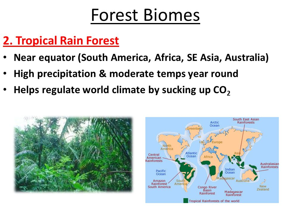 Forest Biomes 2. Tropical Rain Forest Near equator (South America, Africa, SE Asia, Australia) High precipitation & moderate temps year round Helps re