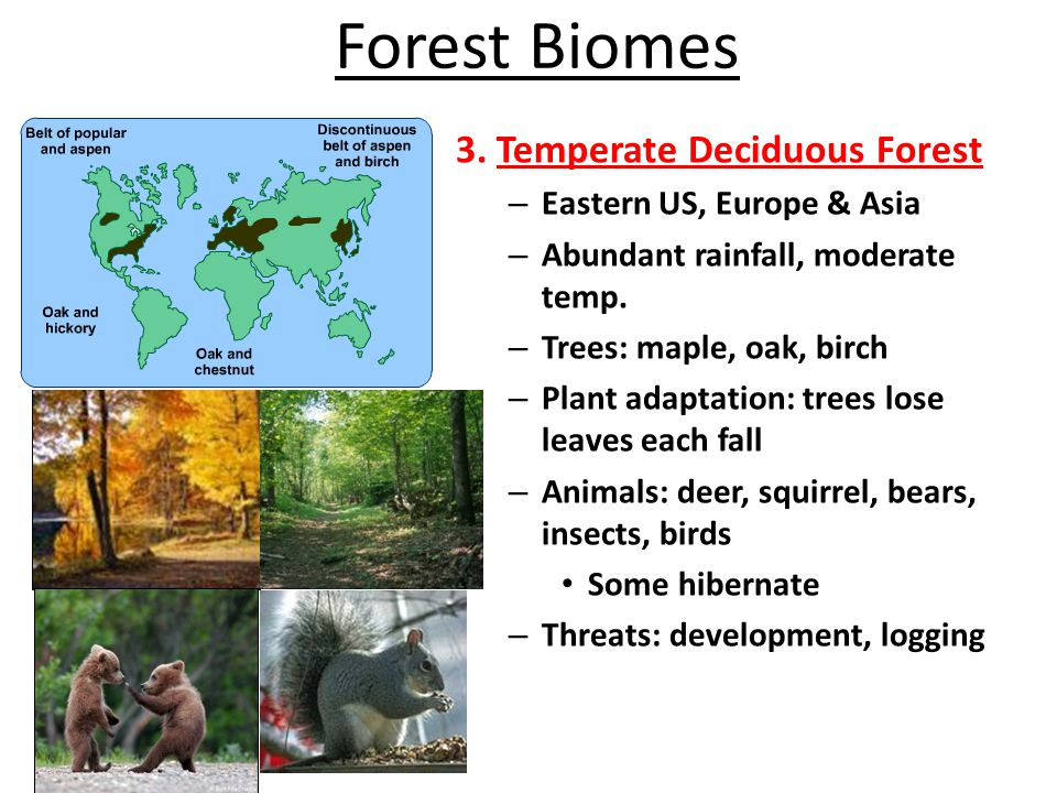 Forest Biomes 4.