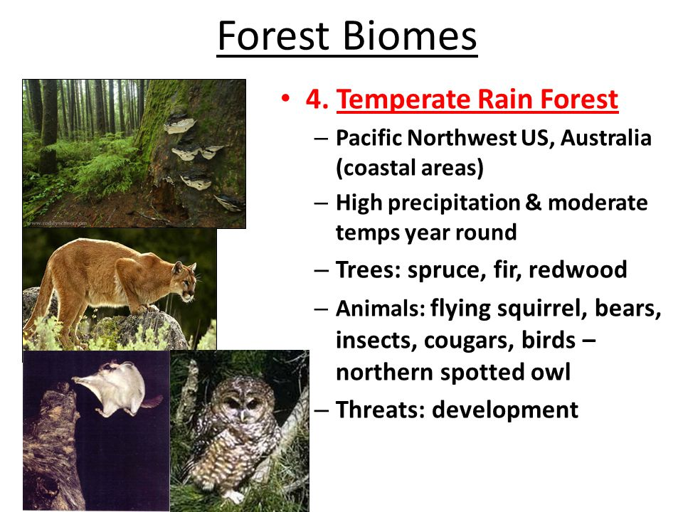 Forest Biomes 4. Temperate Rain Forest – Pacific Northwest US, Australia (coastal areas) – High precipitation & moderate temps year round – Trees: spr