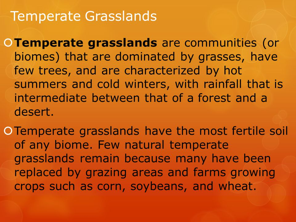 Temperate Grasslands  Temperate grasslands are communities (or biomes) that are dominated by grasses, have few trees, and are characterized by hot summers and cold winters, with rainfall that is intermediate between that of a forest and a desert.