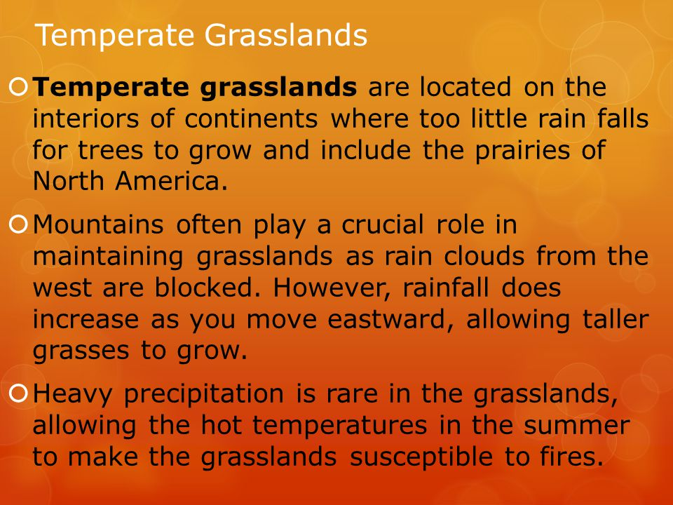 Temperate Grasslands  Temperate grasslands are located on the interiors of continents where too little rain falls for trees to grow and include the prairies of North America.