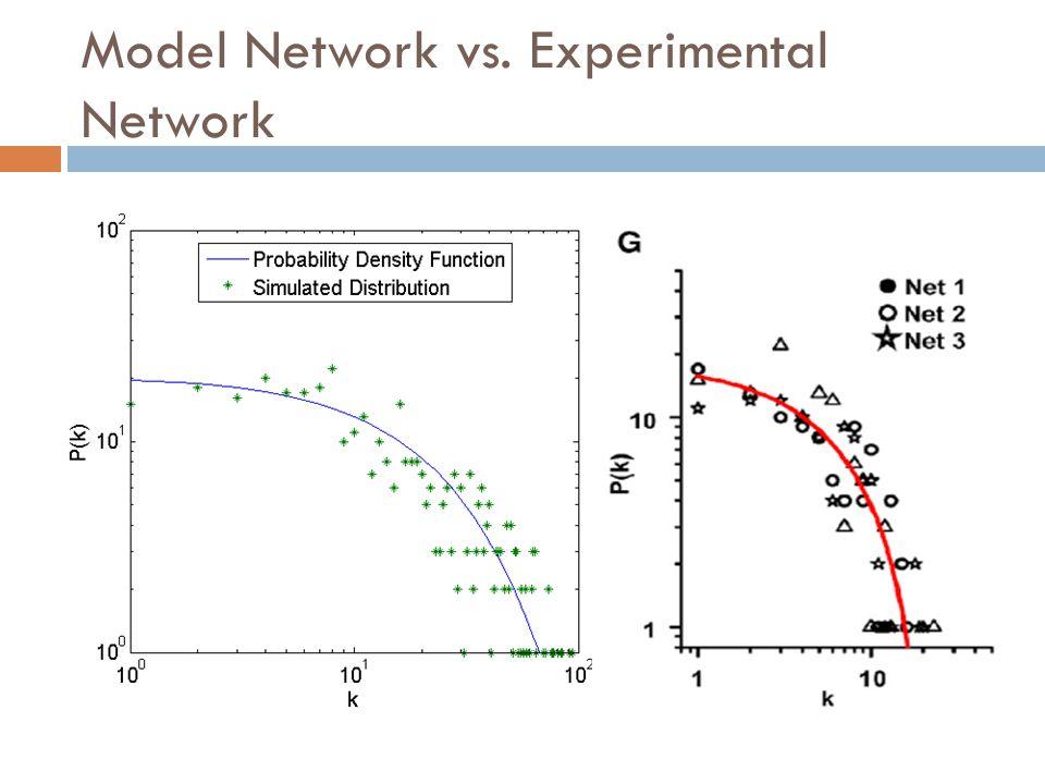 Model Network vs. Experimental Network