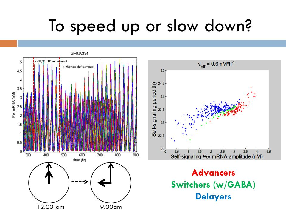 To speed up or slow down? 12:00 am 9:00am Advancers Switchers (w/GABA) Delayers