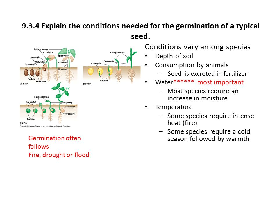 9.3.4 Explain the conditions needed for the germination of a typical seed. Conditions vary among species Depth of soil Consumption by animals -- Seed