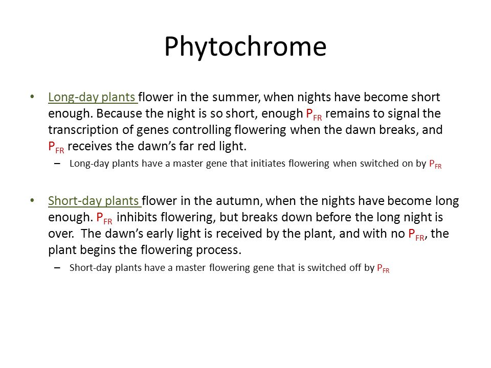 Phytochrome Long-day plants flower in the summer, when nights have become short enough.