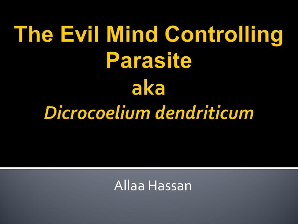 Allaa Hassan