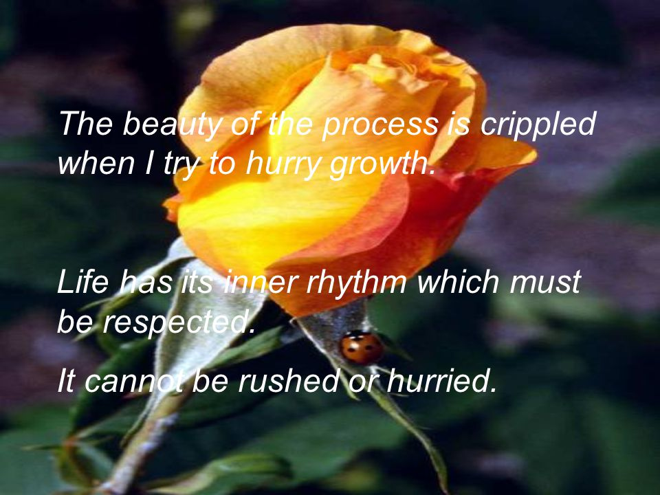 The beauty of the process is crippled when I try to hurry growth. Life has its inner rhythm which must be respected. It cannot be rushed or hurried.
