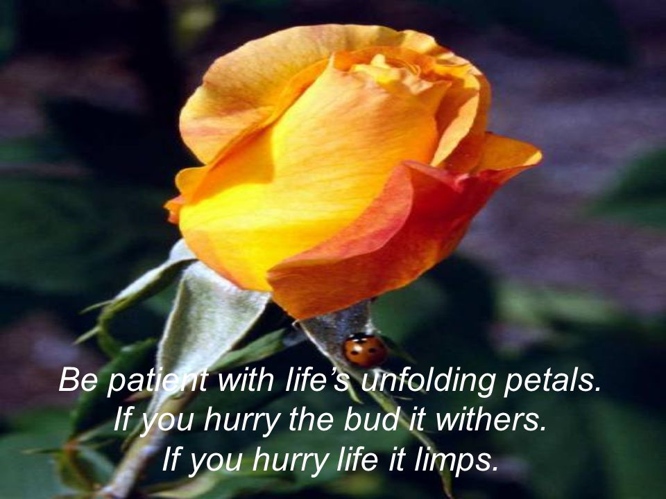 Be patient with life's unfolding petals. If you hurry the bud it withers. If you hurry life it limps.