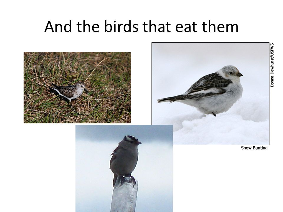 And the birds that eat them