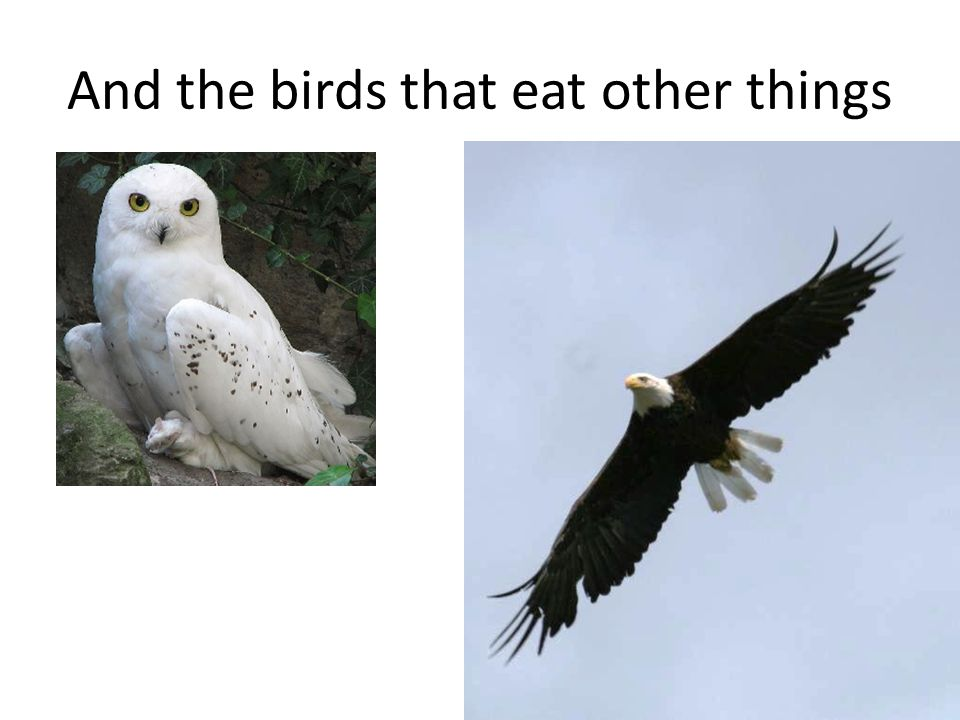 And the birds that eat other things