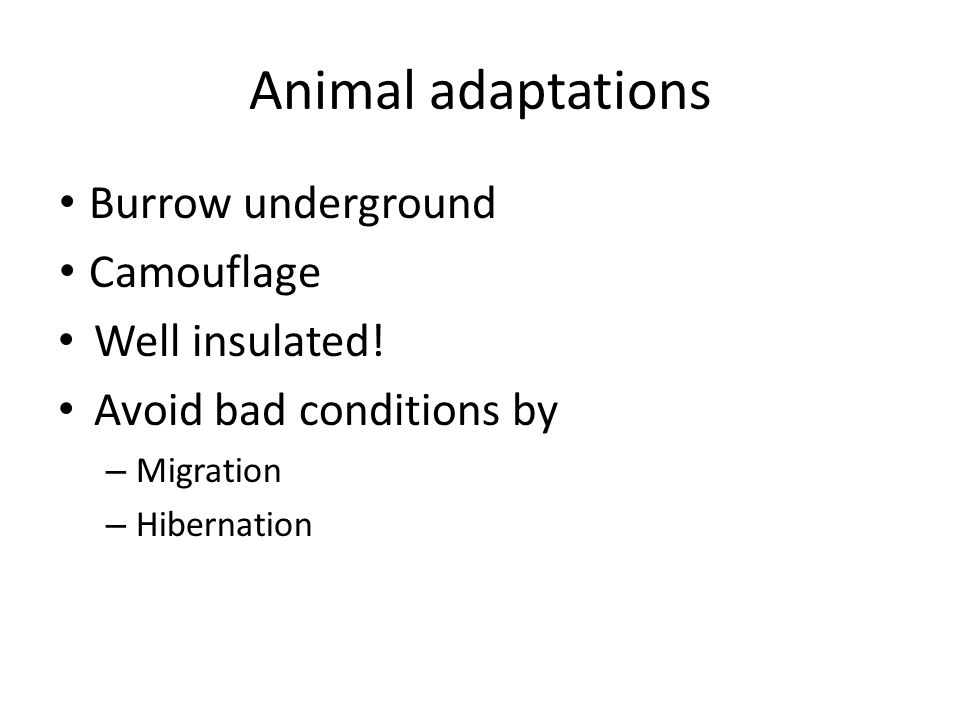 Animal adaptations Burrow underground Camouflage Well insulated! Avoid bad conditions by – Migration – Hibernation