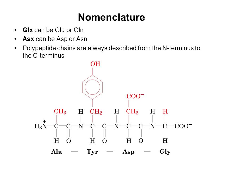 Nomenclature Glx can be Glu or Gln Asx can be Asp or Asn Polypeptide chains are always described from the N-terminus to the C-terminus