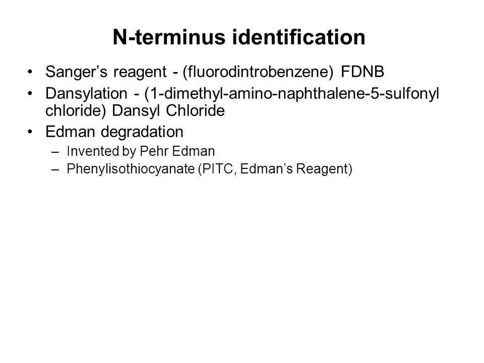 N-terminus identification Sanger's reagent - (fluorodintrobenzene) FDNB Dansylation - (1-dimethyl-amino-naphthalene-5-sulfonyl chloride) Dansyl Chloride Edman degradation –Invented by Pehr Edman –Phenylisothiocyanate (PITC, Edman's Reagent)