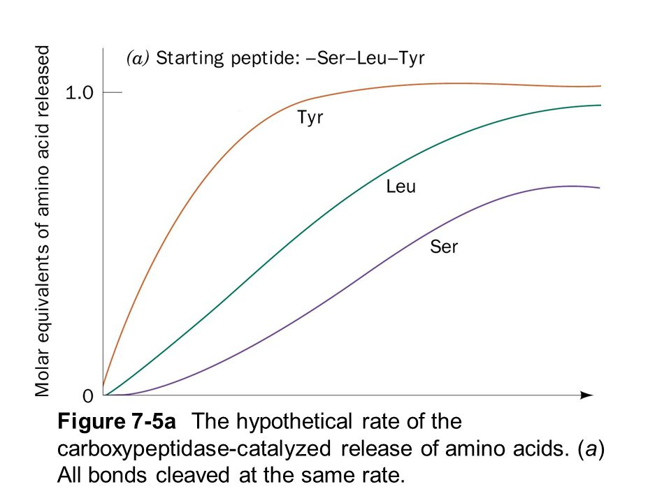 Figure 7-5aThe hypothetical rate of the carboxypeptidase-catalyzed release of amino acids. (a) All bonds cleaved at the same rate.