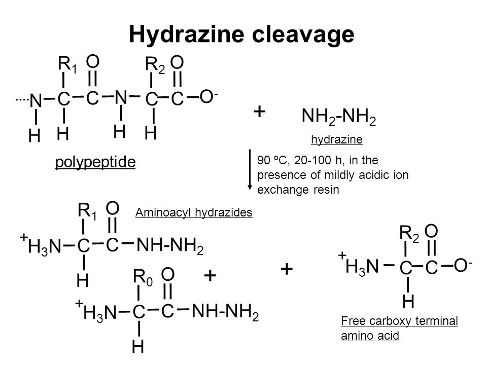 Hydrazine cleavage N H polypeptide H C R1R1 C O N H C R2R2 H C O O-O- NH 2 -NH 2 H3NH3N H C R2R2 C O O-O- + H C R1R1 C O NH-NH 2 H3NH3N + H C R0R0 C O H3NH3N + + hydrazine Free carboxy terminal amino acid Aminoacyl hydrazides + + 90 ºC, 20-100 h, in the presence of mildly acidic ion exchange resin