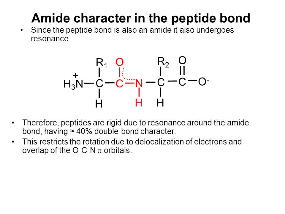 Amide character in the peptide bond Since the peptide bond is also an amide it also undergoes resonance. H CN R1R1 H3NH3N + C O HH C R2R2 O-O- C O The