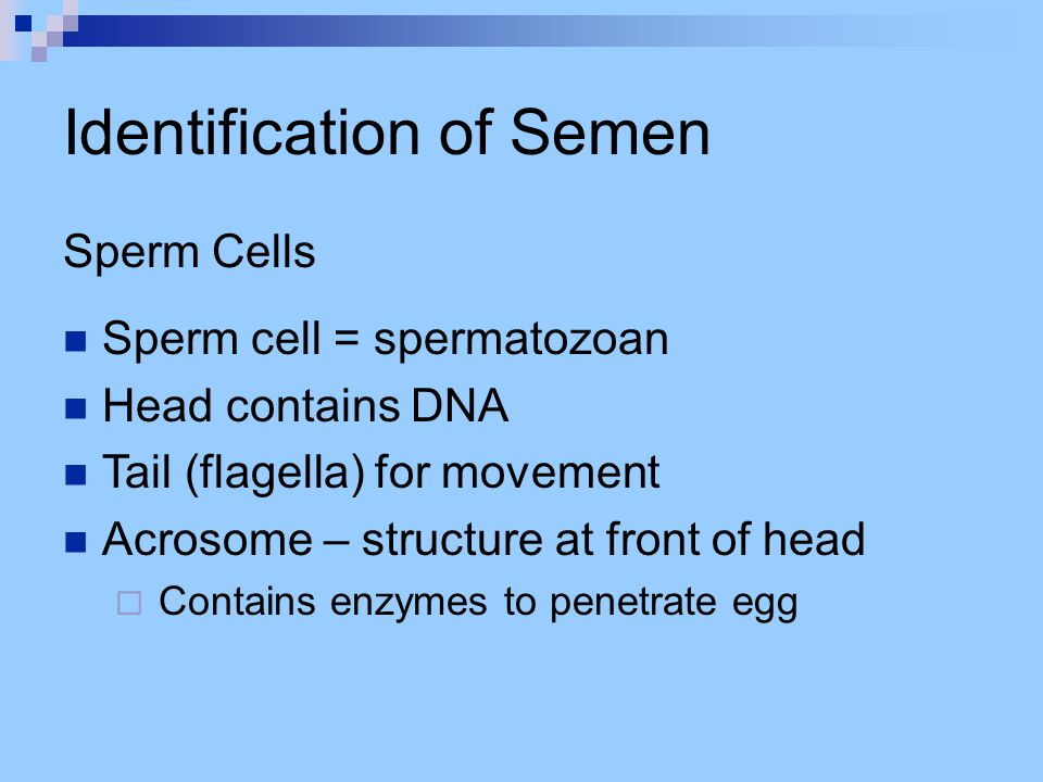 Identification of Semen Searching for Semen Stains May be on clothing, skin, bedding, etc.