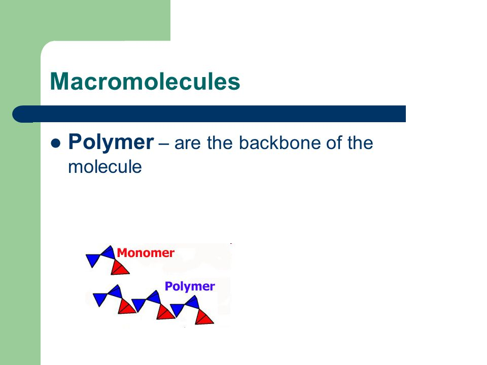 Macromolecules Polymer – are the backbone of the molecule