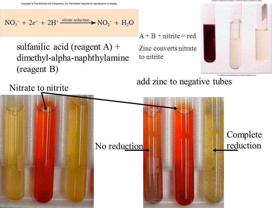 sulfanilic acid (reagent A) + dimethyl-alpha-naphthylamine (reagent B) Nitrate to nitrite add zinc to negative tubes No reduction Complete reduction A