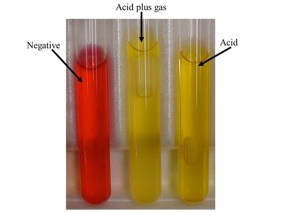 Negative Acid plus gas Acid