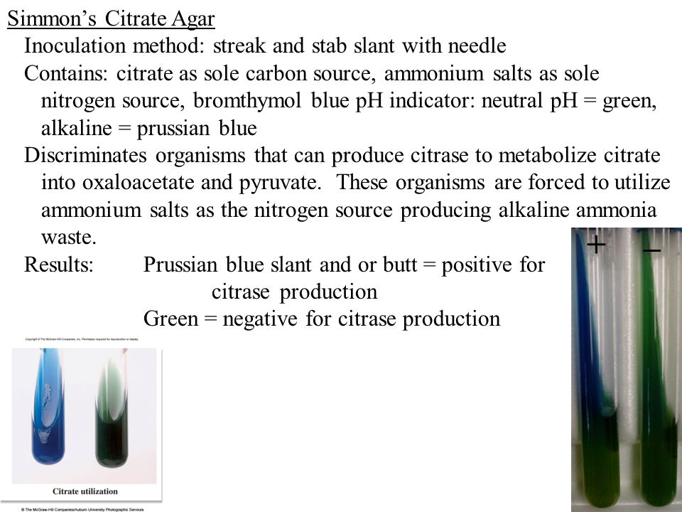 Simmon's Citrate Agar Inoculation method: streak and stab slant with needle Contains: citrate as sole carbon source, ammonium salts as sole nitrogen s