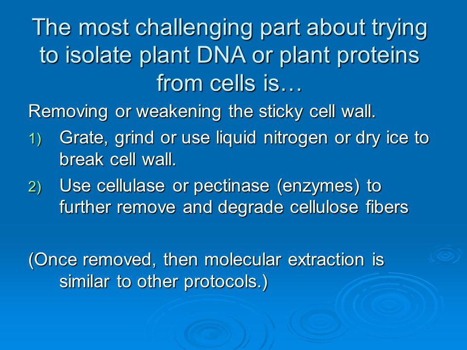 The most challenging part about trying to isolate plant DNA or plant proteins from cells is… Removing or weakening the sticky cell wall. 1) Grate, gri
