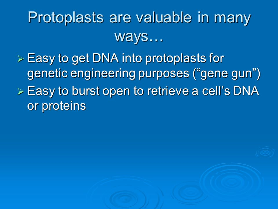 """Protoplasts are valuable in many ways…  Easy to get DNA into protoplasts for genetic engineering purposes (""""gene gun"""")  Easy to burst open to retrie"""