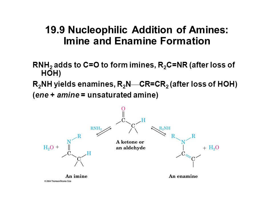 19.9 Nucleophilic Addition of Amines: Imine and Enamine Formation RNH 2 adds to C=O to form imines, R 2 C=NR (after loss of HOH) R 2 NH yields enamines, R 2 N  CR=CR 2 (after loss of HOH) (ene + amine = unsaturated amine)
