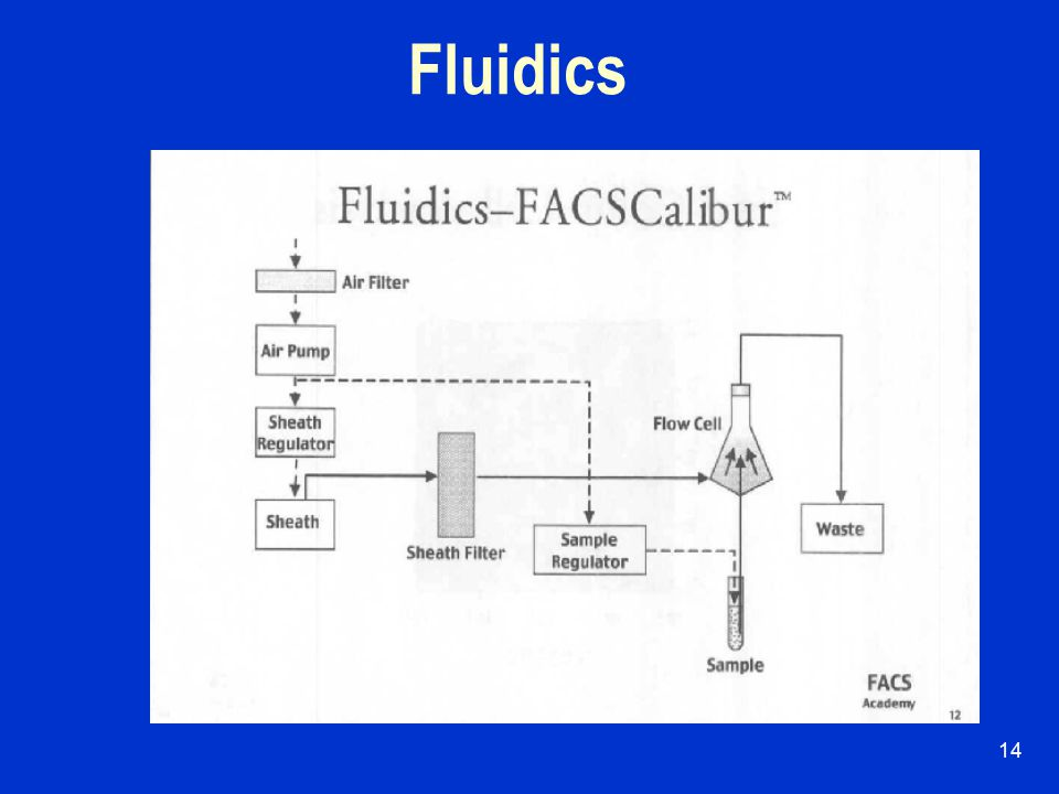13 Flow Cytometry System Fluidics  To introduce and focus cells for analysis.