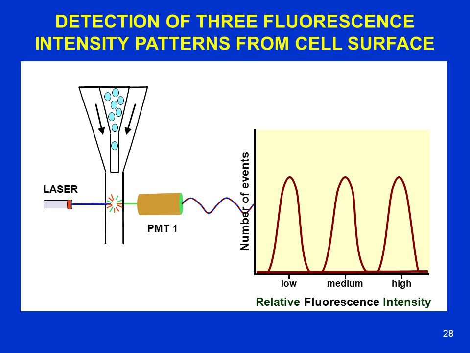 27 PMT 1 LASER FLUORESCENCE INTENSITY PATTERN FROM A CELL POPULATION Number of events Relative Fluorescence Intensity lowmediumhigh