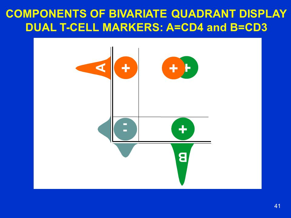 40 BIVARIATE QUADRANTS FOR T-CELL SUBSET MARKERS FSC SSC AB FL2 FL1 +++ + Mandy et al., 2001