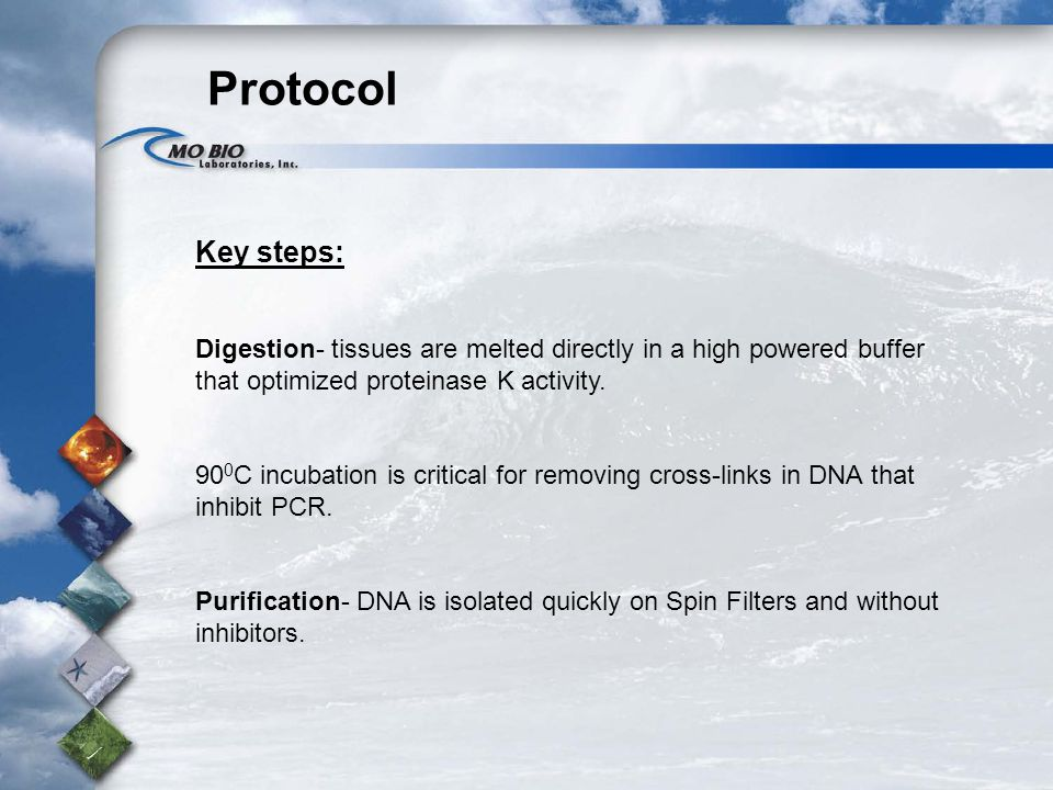 Protocol Key steps: Digestion- tissues are melted directly in a high powered buffer that optimized proteinase K activity.