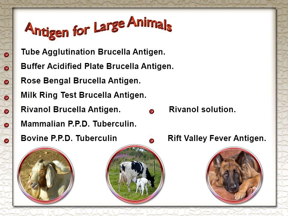 Tube Agglutination Brucella Antigen. Buffer Acidified Plate Brucella Antigen.