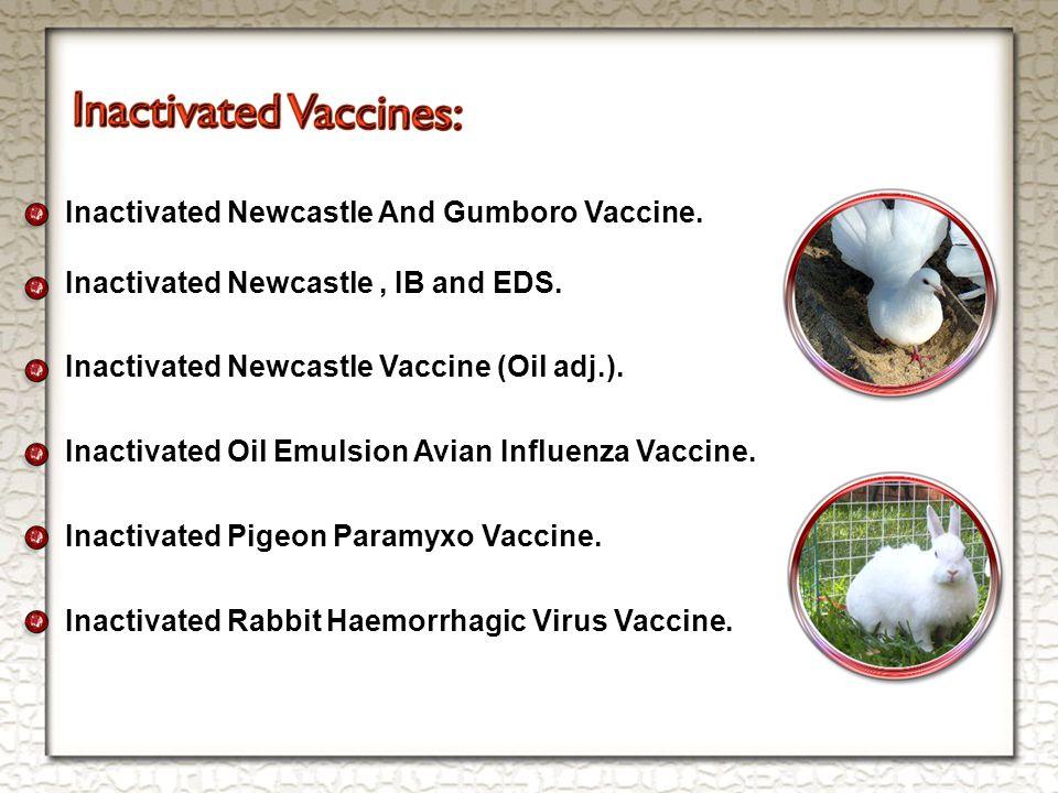 Inactivated Newcastle And Gumboro Vaccine. Inactivated Newcastle, IB and EDS.