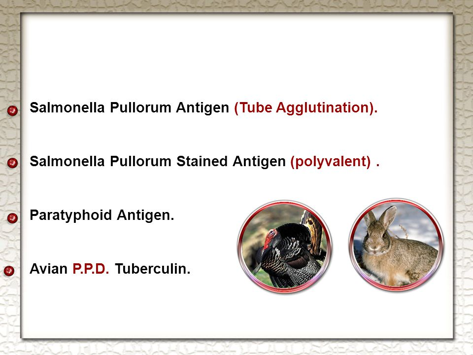 Salmonella Pullorum Antigen (Tube Agglutination). Salmonella Pullorum Stained Antigen (polyvalent).