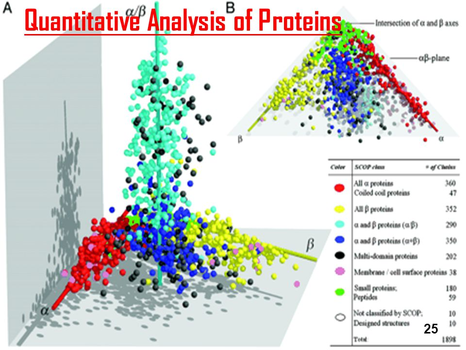 Quantitative Analysis of Proteins 25