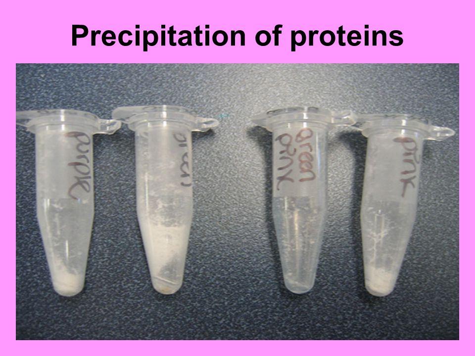 Precipitation of proteins