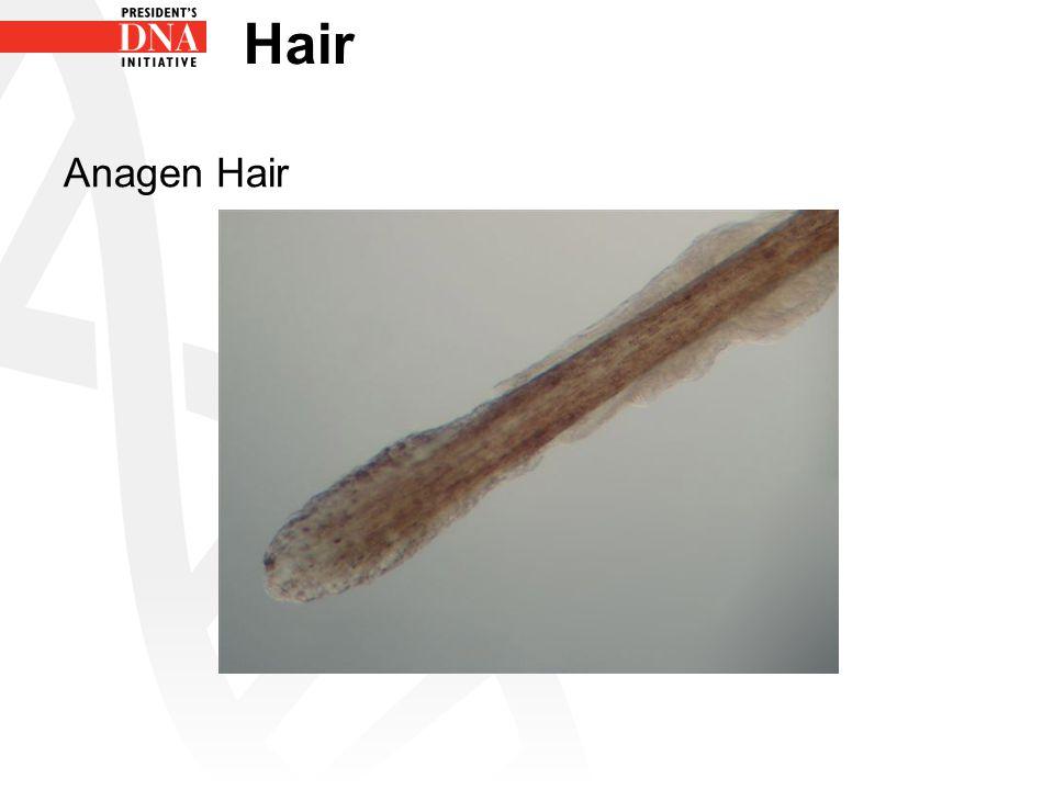 Hair Anagen Hair