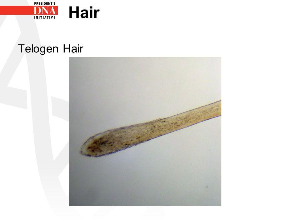 Hair Telogen Hair