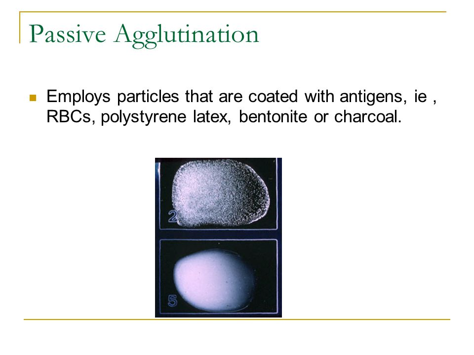 Passive Agglutination Employs particles that are coated with antigens, ie, RBCs, polystyrene latex, bentonite or charcoal.