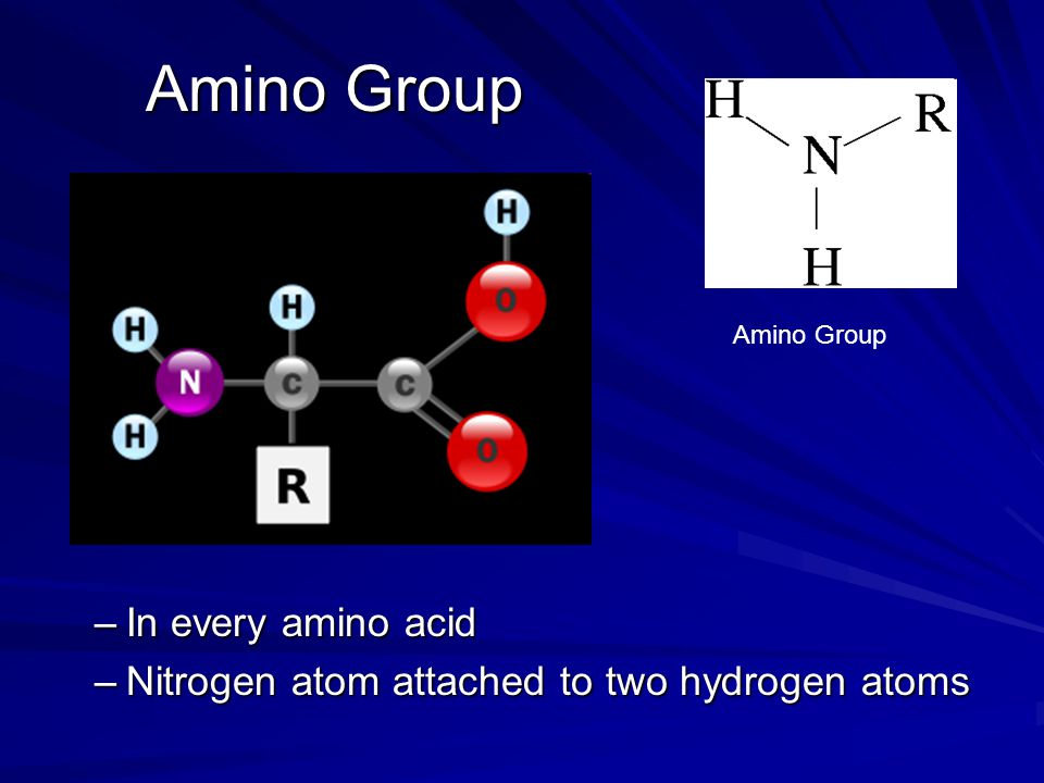 Amino Group –In every amino acid –Nitrogen atom attached to two hydrogen atoms Amino Group