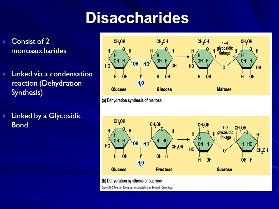 Disaccharides  Consist of 2 monosaccharides  Linked via a condensation reaction (Dehydration Synthesis)  Linked by a Glycosidic Bond