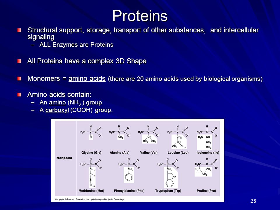 28 Proteins Structural support, storage, transport of other substances, and intercellular signaling –ALL Enzymes are Proteins All Proteins have a comp