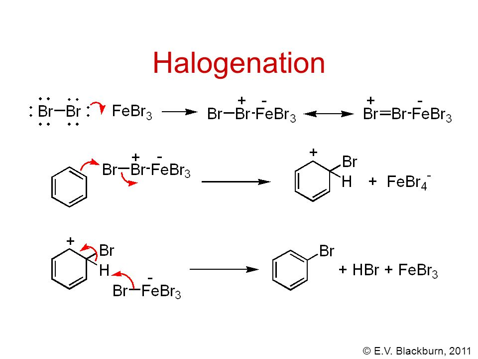 © E.V. Blackburn, 2011 Halogenation